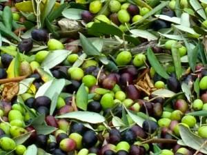 nov-1st-olives